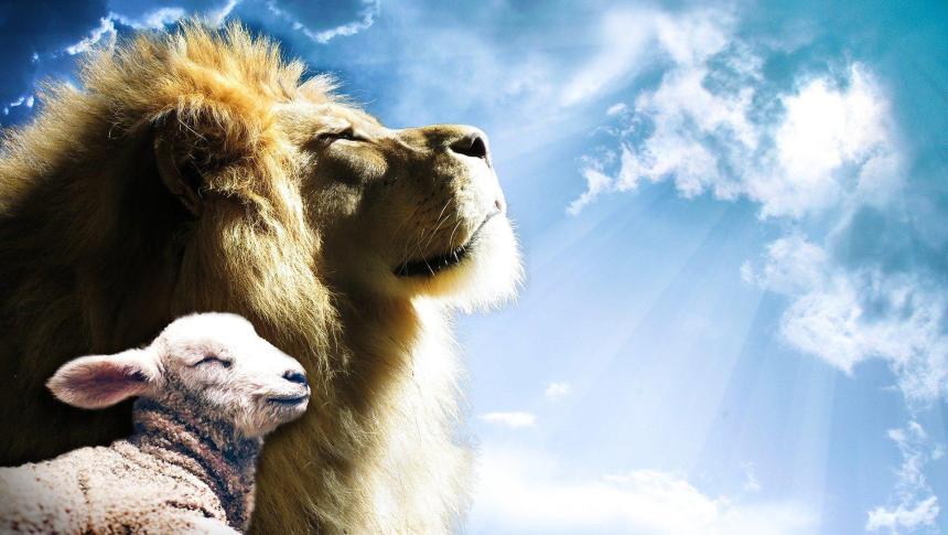 Lejon och ett lamm.